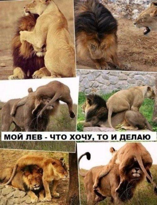 http://otvet.imgsmail.ru/download/u_feaf7b07a0133775abe9b89b21ceae9a_800.jpg