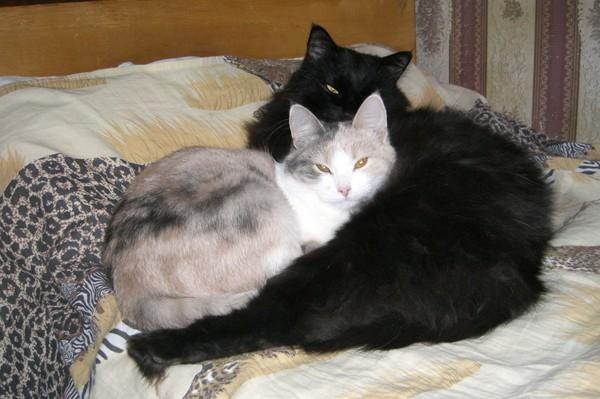 Кот загребает миски с едой