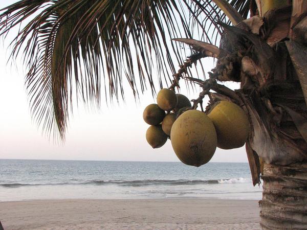Не растет кокос