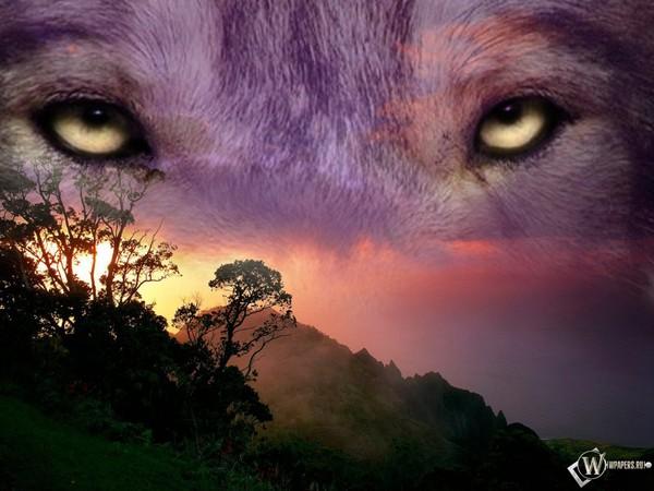 Волчьи глаза загрузить