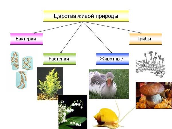 Картинки с названием о природе