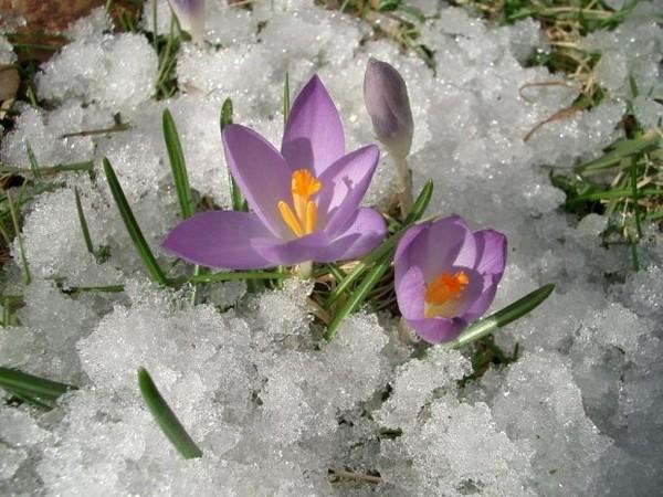 Сочинение тему картинки весны 4 класс