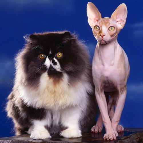 Различают ли цвет кошки
