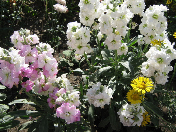 Цветы цветущие до заморозков