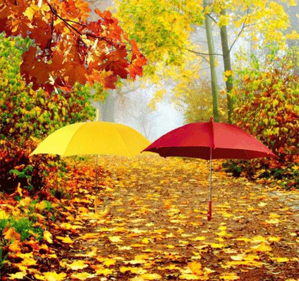 Зонт желтый лужи бесплатно