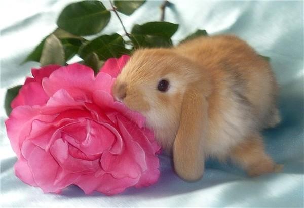 Заяц с розой открытки, открытки днем рождения