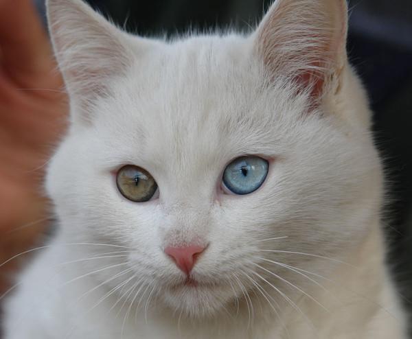 Снится чему котенок к белый ответы