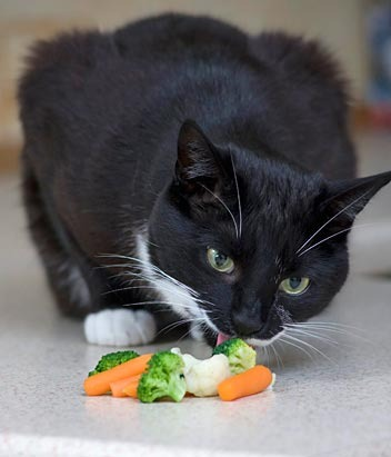 food for older cats uk tour