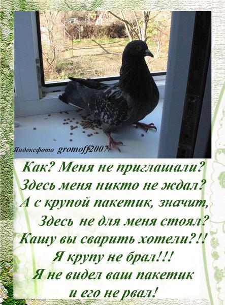 Ответы@mail.ru: мало голубям моих балконов, они теперь в ком.