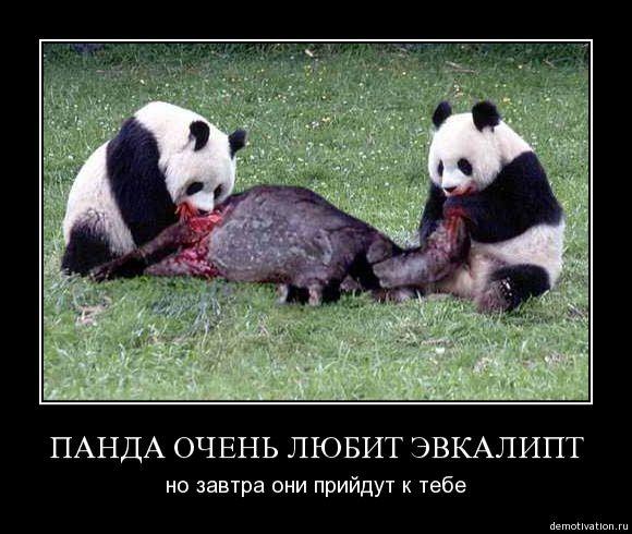 Liod Итальянская обнимите панду и получите деньги главной