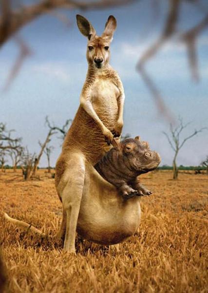 у самца кенгуру есть сумка полезный хлебушек,который отлично