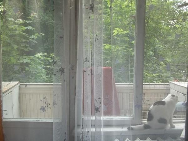 Ответы@mail.ru: москитная сетка анти-кошка на деревянные окн.