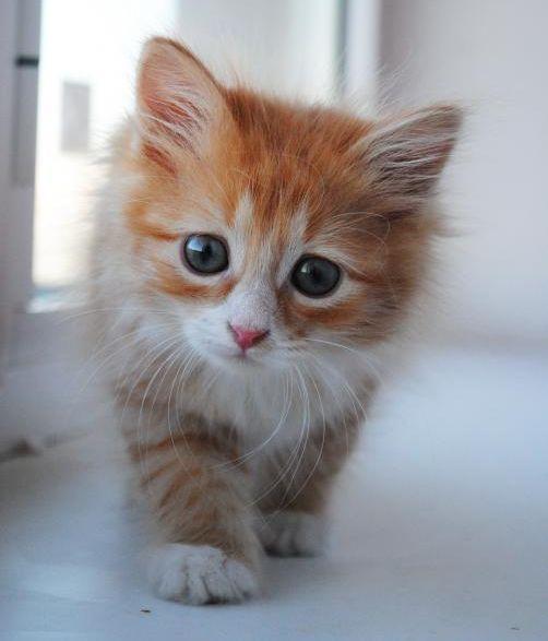 Картинки с котятами с прикольными надписями, картинки красивые поздравления