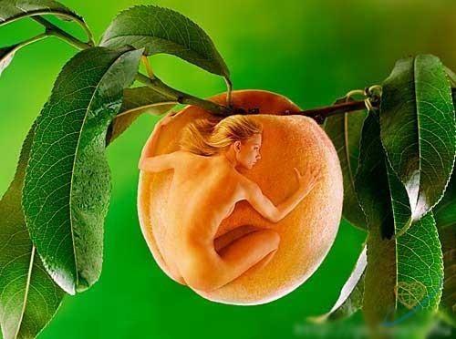 Смешные картинки персики