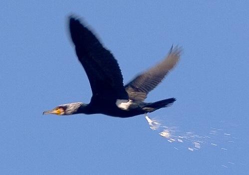 Если птичка накакала на голову, – примета к удаче, которая принесет с собой хорошую прибыль.