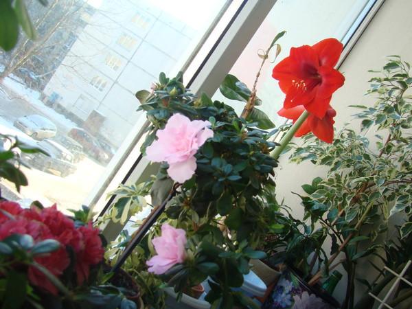 Ответы@mail.ru: хочу сделать зимний сад на балконе. какой до.
