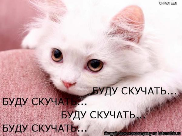 Иван чай, открытка уезжаю но буду скучать