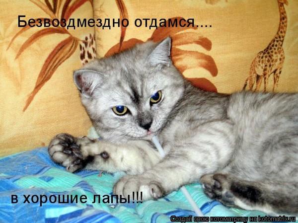 Что можно приготовить коту