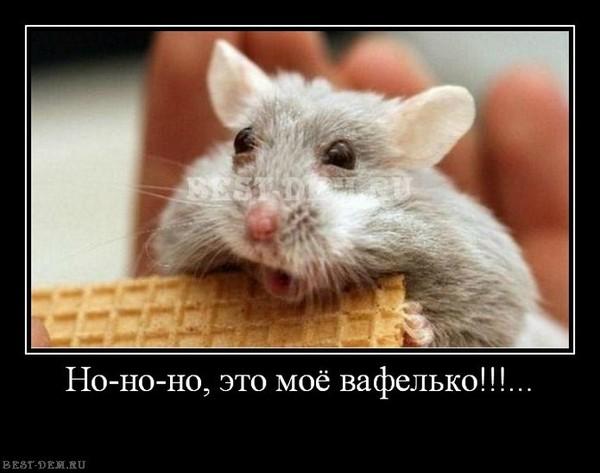 Хомяк ест вафлю