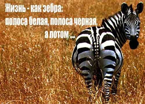 решил покажи картинки зебры как ее любить а не говори фото