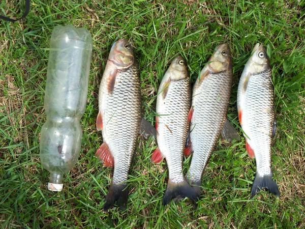 Ответы Mail.Ru: На что можно ловить рыбу кроме червей?