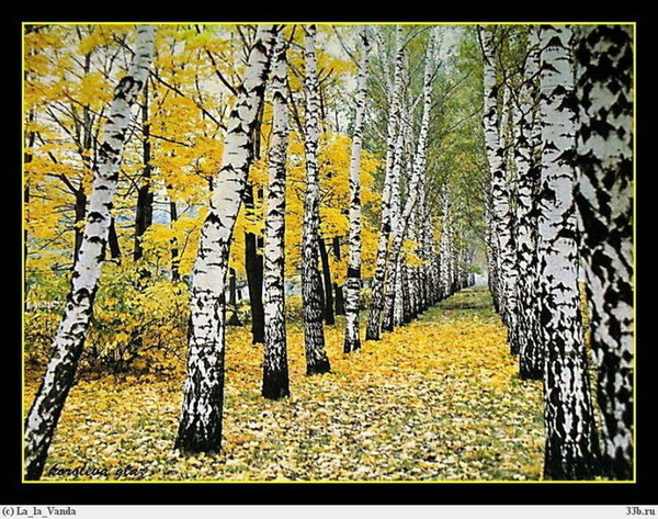 осень настала картинки
