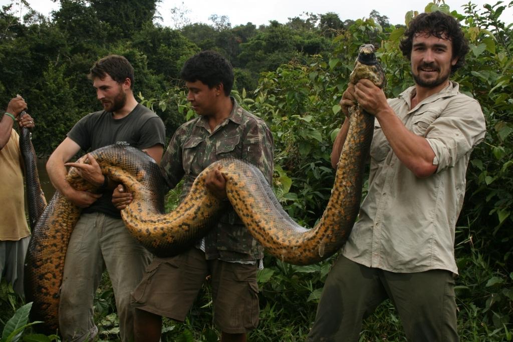 самая большая змея в мире смотреть картинки через пять девушку
