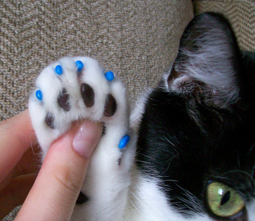 Cat paw nail covers