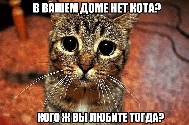 Если в доме нет кота значит в доме пустота если в доме два кота