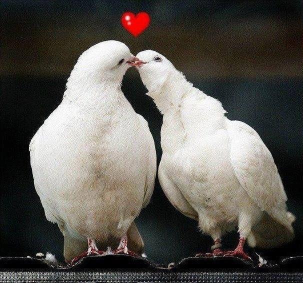 Открыток, открытка ты моя голубка