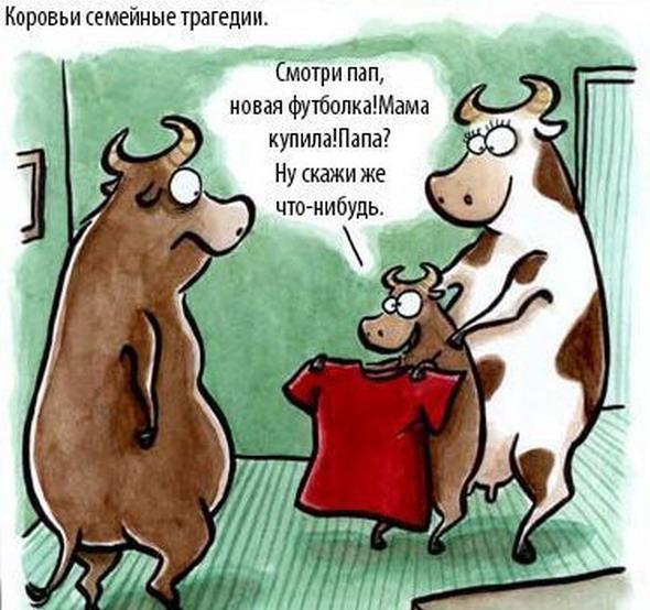 Корова в картинках с юмором