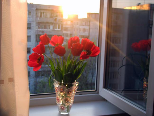 Подарить цветы с окнах