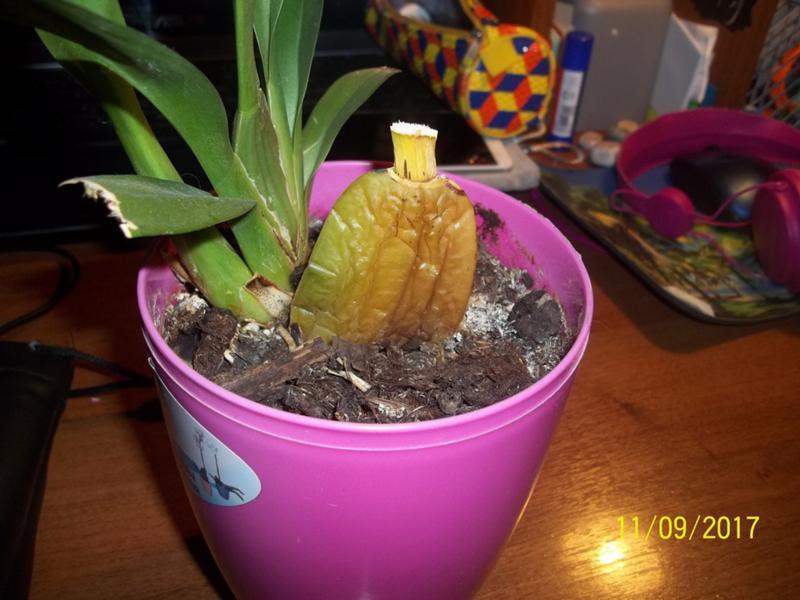 Фото орхидеи на камнях высокого разрешения разведчика