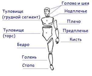 фото плечо человека
