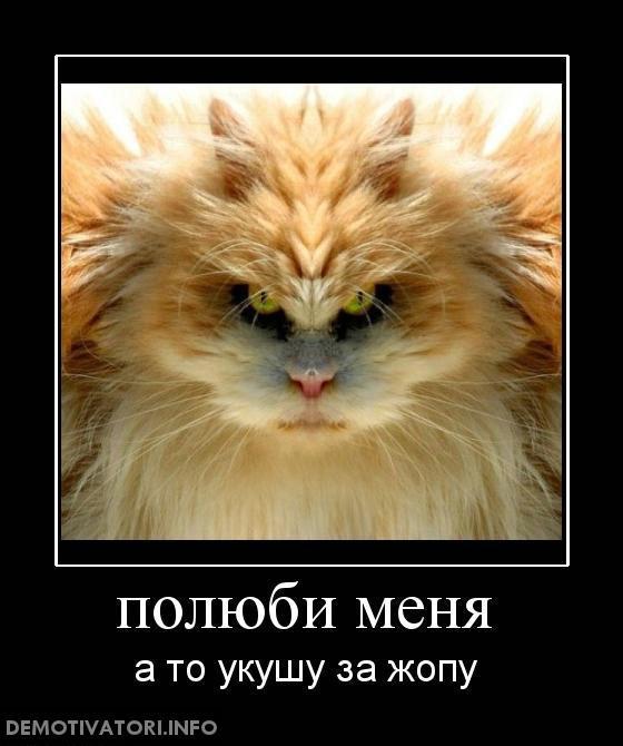 Смешные фото звезд шоу бизнеса советское