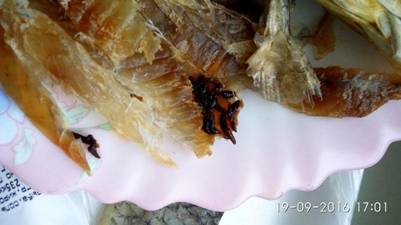 Необходимо удостовериться, заражена или нет рыба, предназначенная для приготовления пищи.