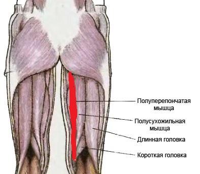 Потянул мышцы ноги что делать