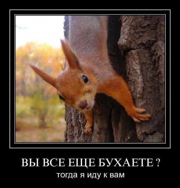 Открытки много не пейте, дню славянской