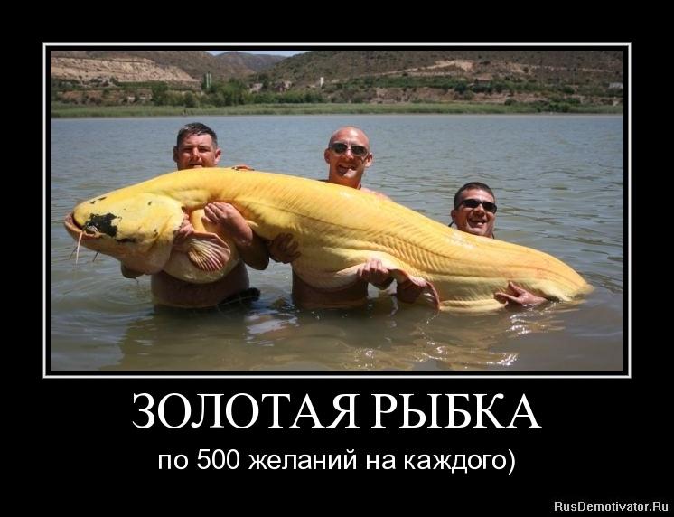 Любимому зае, золотая рыбка прикол картинка