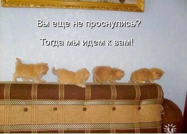 https://otvet.imgsmail.ru/download/1094629ea893e6208f9bbae6bcac413a_i-3769.jpg