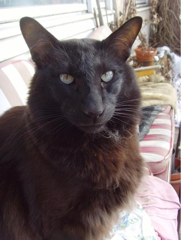 фото котов страшных