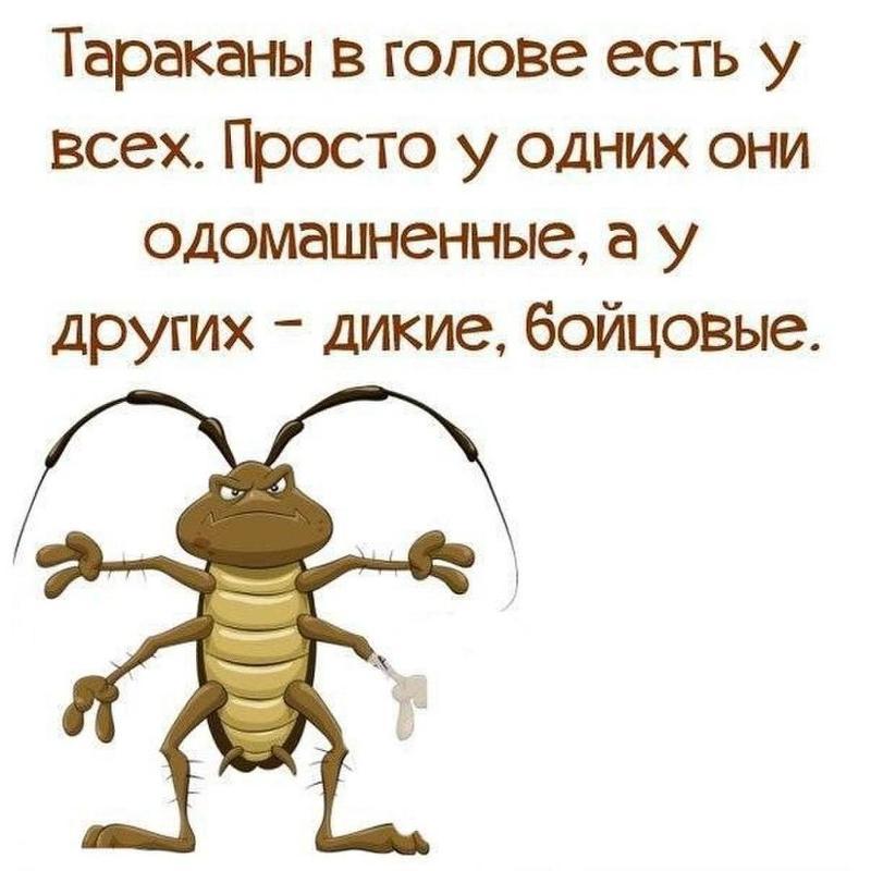 Тараканы в картинках смешные
