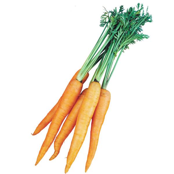 морковка фотостоки #2