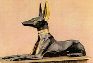 собака египетская фото