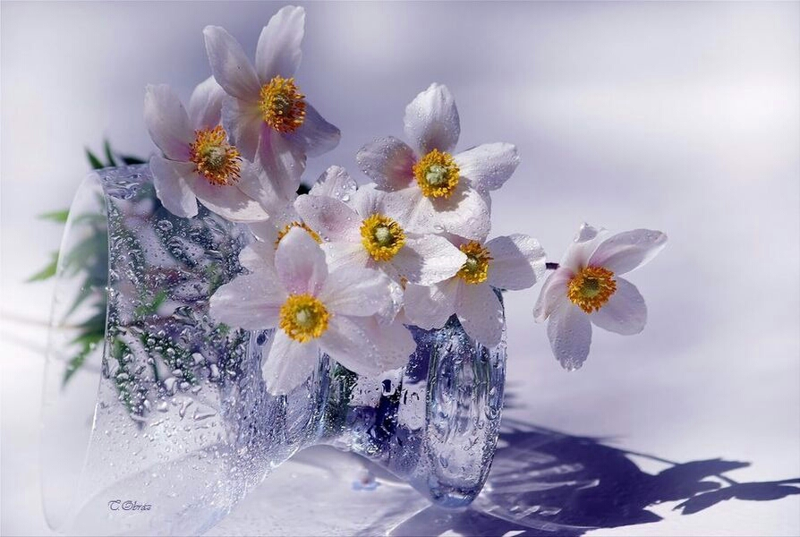 Наступающим, весна цветы картинки с надписями