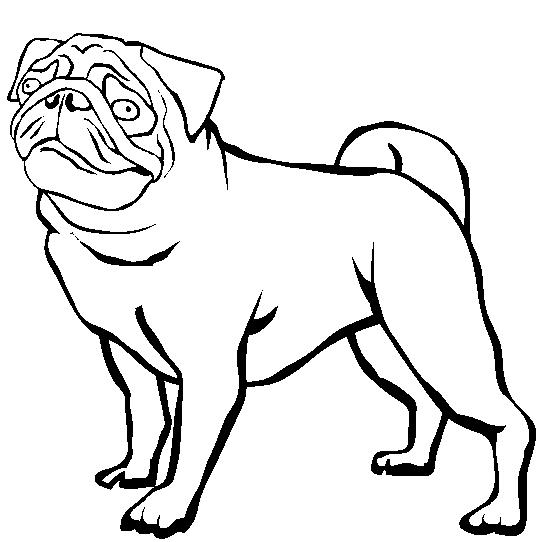 картинки раскраски щенки мопса очень приятно