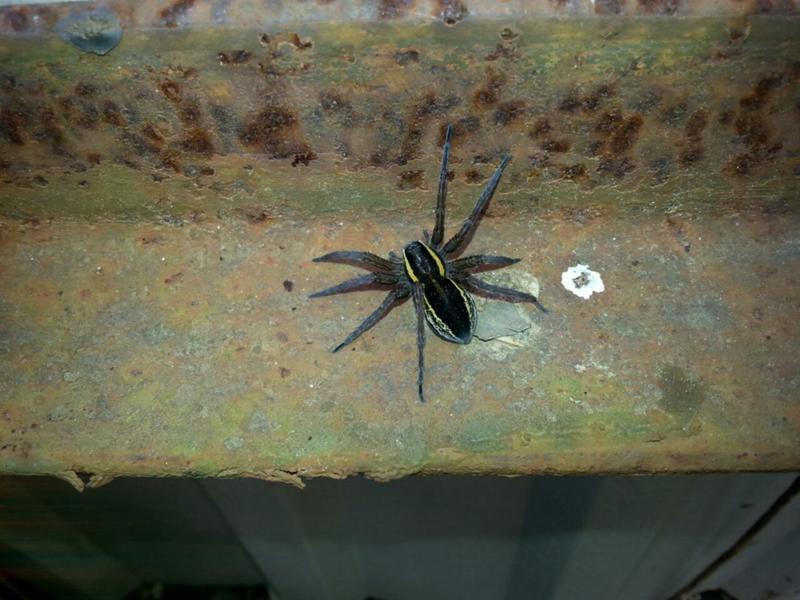 как узнать по фото что за паук отвечает моментальное