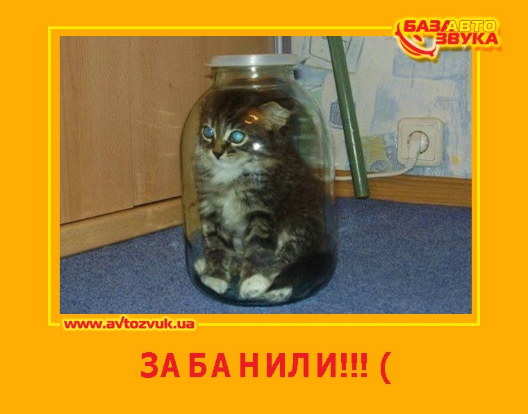 https://otvet.imgsmail.ru/download/12441138_0f371307d23aa59e3546529c8f1af670_800.jpg