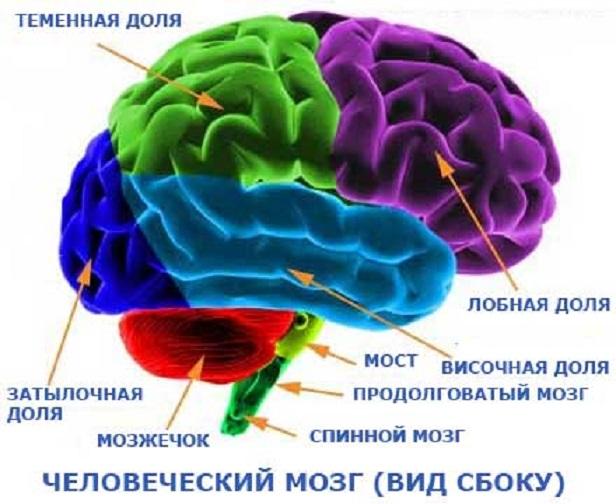 teenage brain term paper