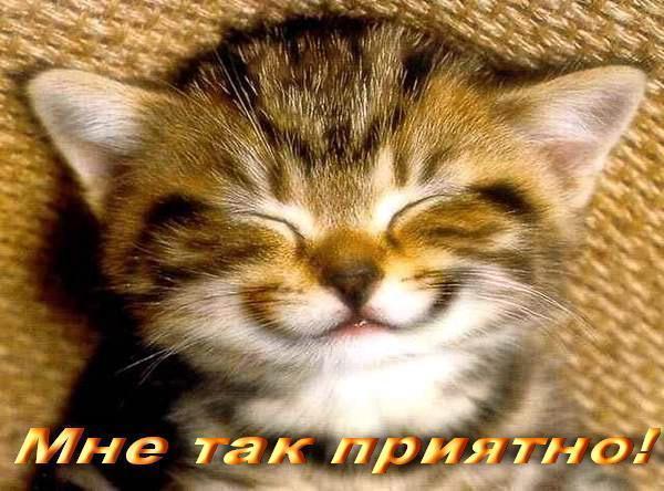 Cats saying stupid stuff